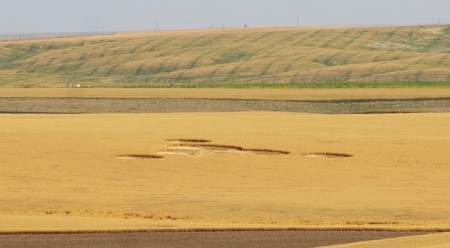 washington crop circle