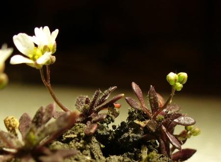 tiny spring flower