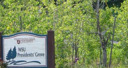 grand-avenue-overview-20130601-12-577