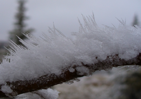 branch with crystals