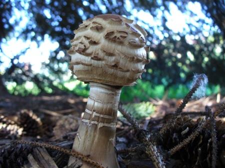new mushroom closeup