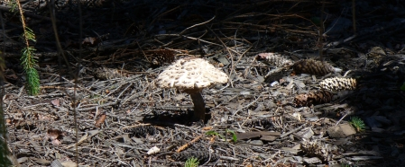 fully developed mushroom