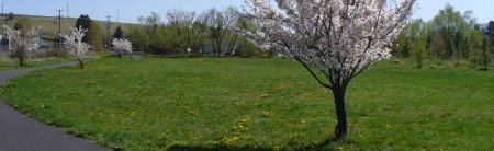 meadow by the bike path