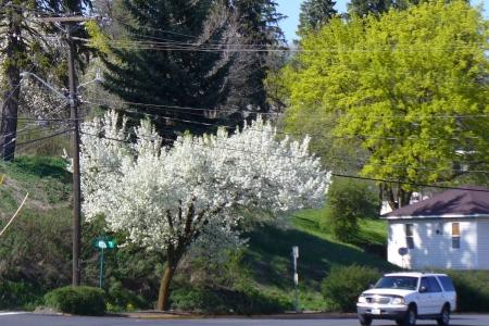 urban fruit tree