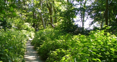 discover park seattle trail to beach