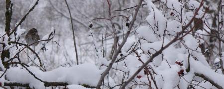 winter scene bird in bush