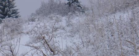 snow shrouded scene
