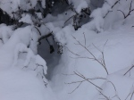 rabbit run in snow