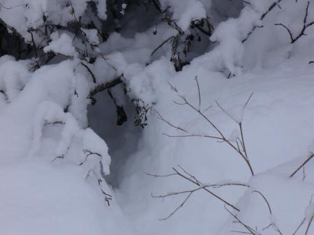 rabbit run in snow