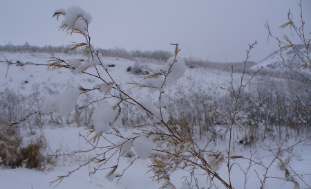 winter - weed wearing some snow