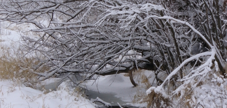 winter - tree over a creek
