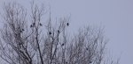 birds share a tree