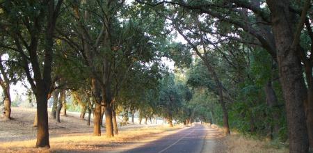 parkway grove evening