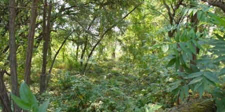 forest understory