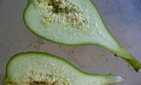 Unripe fig cut open.