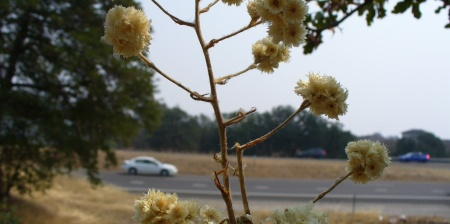 Redding dried flowers
