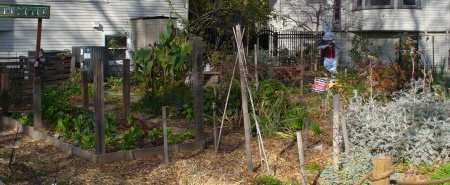 20181213-119-walk-through-sacramento-garden-patch.jpg