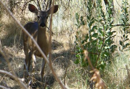 deer-ARP-20190720-113