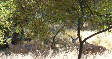 deer-ARP-upper-trail-20190831-053