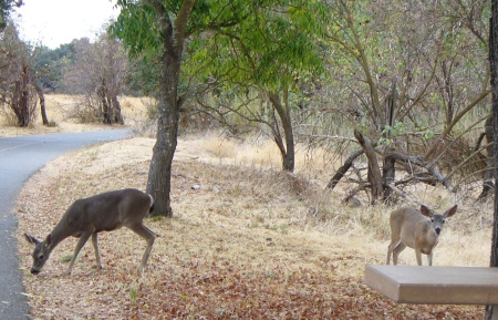 deer-ARP-20190928-074