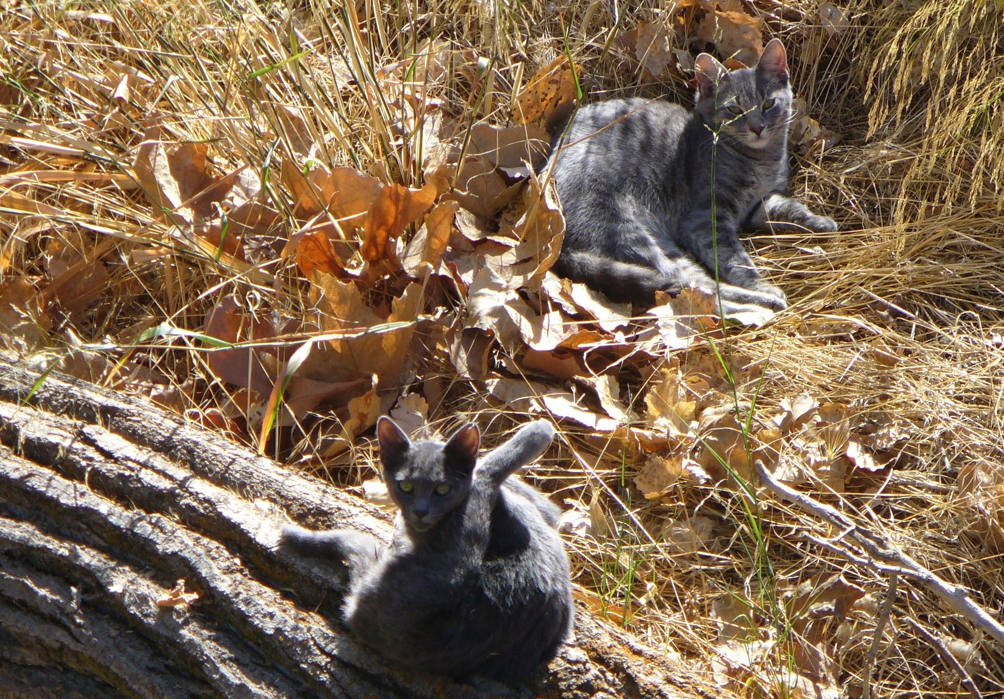 walk-to-drakes-barn-20190928-135-cats