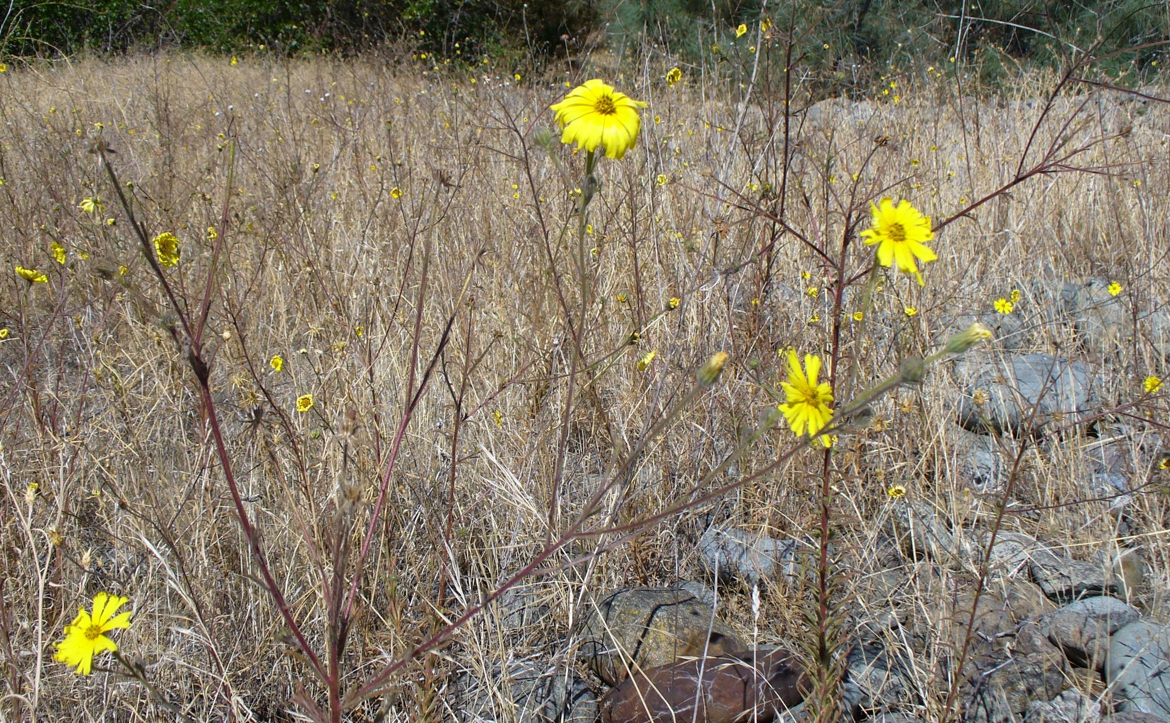 yellow-flower-ARP-20190921-38