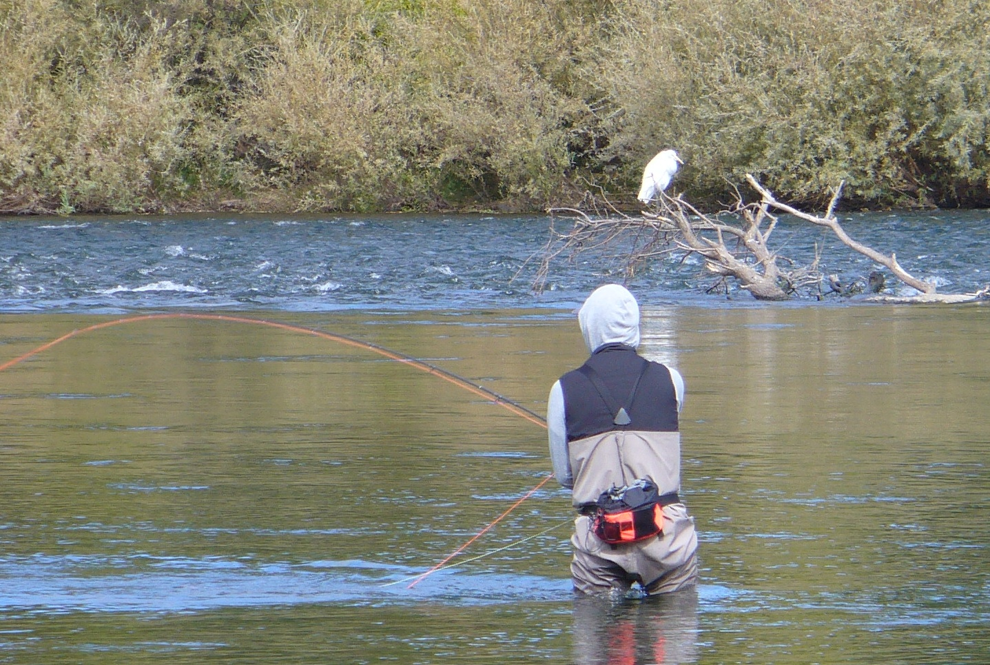 fishing-with-egret-ARP-20191019-_9