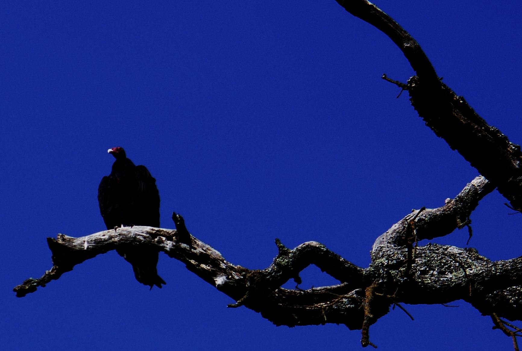 halloween-vulture-dark-20191026-25