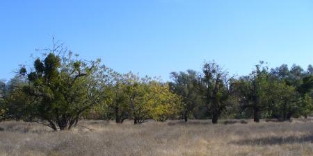 ARP-scenes-20191116-21-walnut-orchard