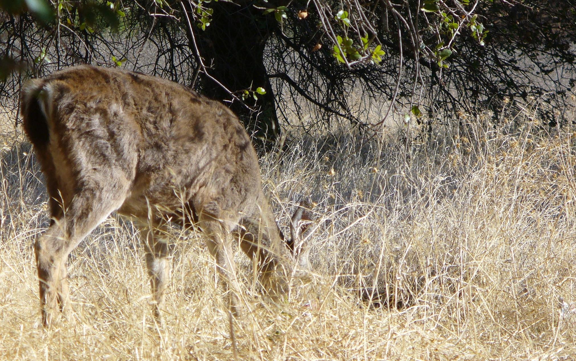 ARP-scenes-20191123-57-deer