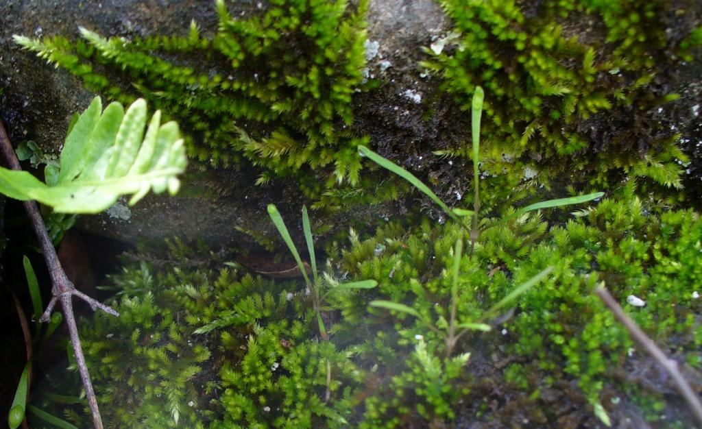 moss growing among the rocks