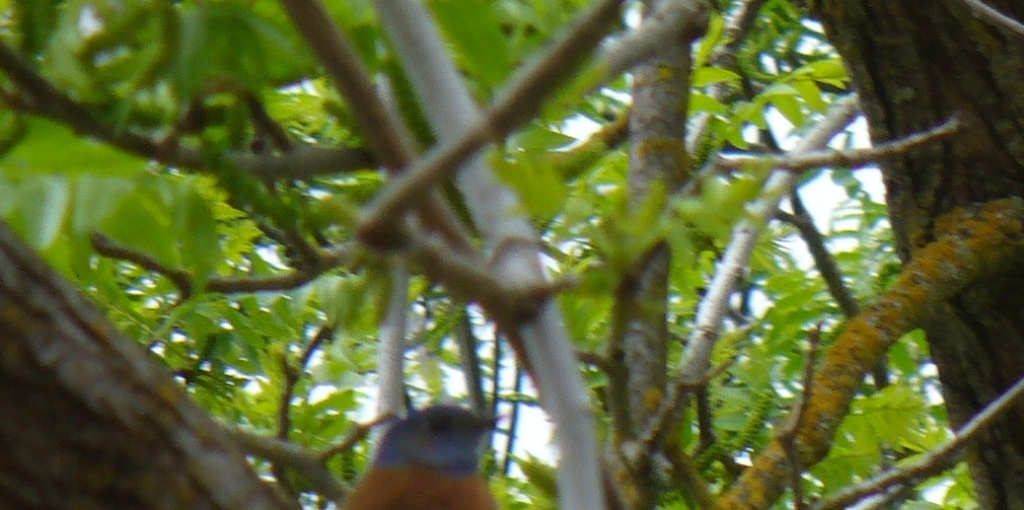 head of bluebird