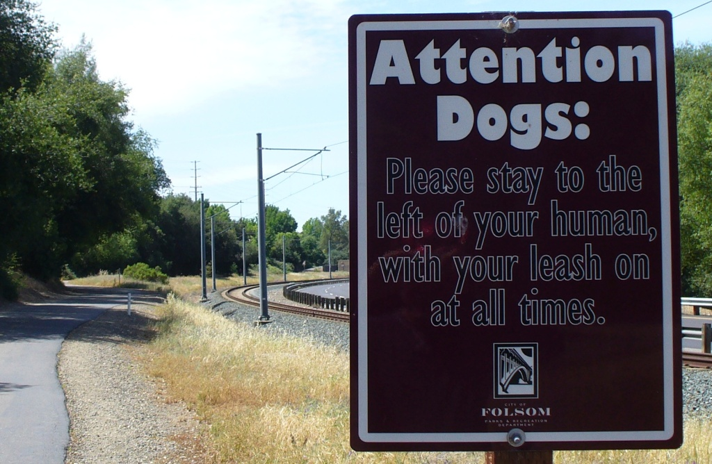 attentions dogs!